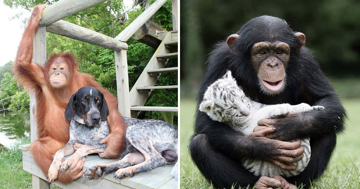 friendship animals.jpg?resize=1200,630 - Friendship With Animals Exists And These 10 Images Are Beautiful Proof