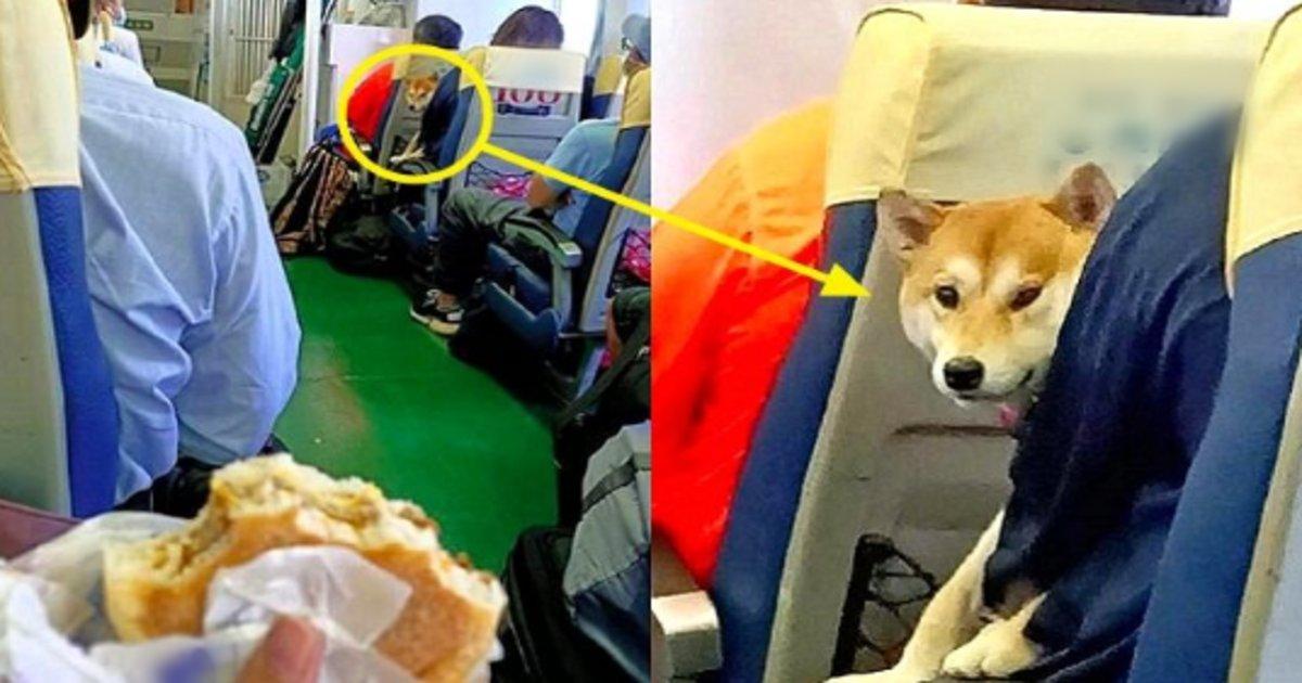 hamberger.png?resize=412,232 - バスの中で食事をしていたところ同乗していた犬が遠くからこっちを見つめていた件…
