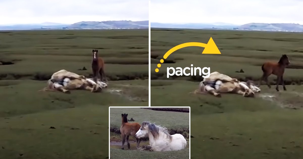 horse.jpg?resize=1200,630 - Baby Horse Saves Injured Mom In The Most Incredible Animal Rescue Ever