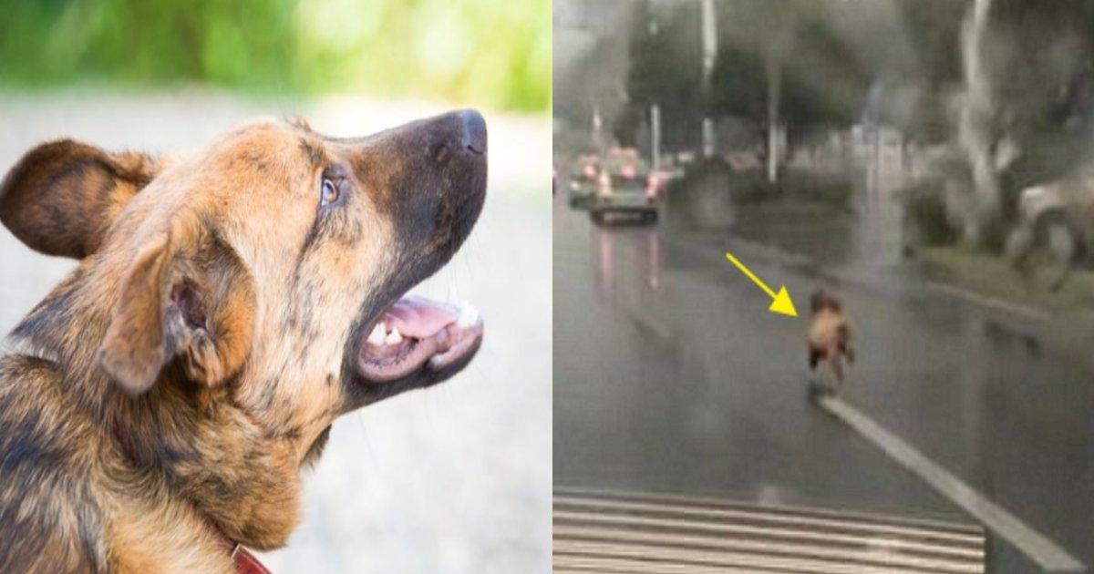 inu suteruna.png?resize=1200,630 - 捨てられたことも知らず飼い主を追いかけ続け、車にひかれて死んだ犬
