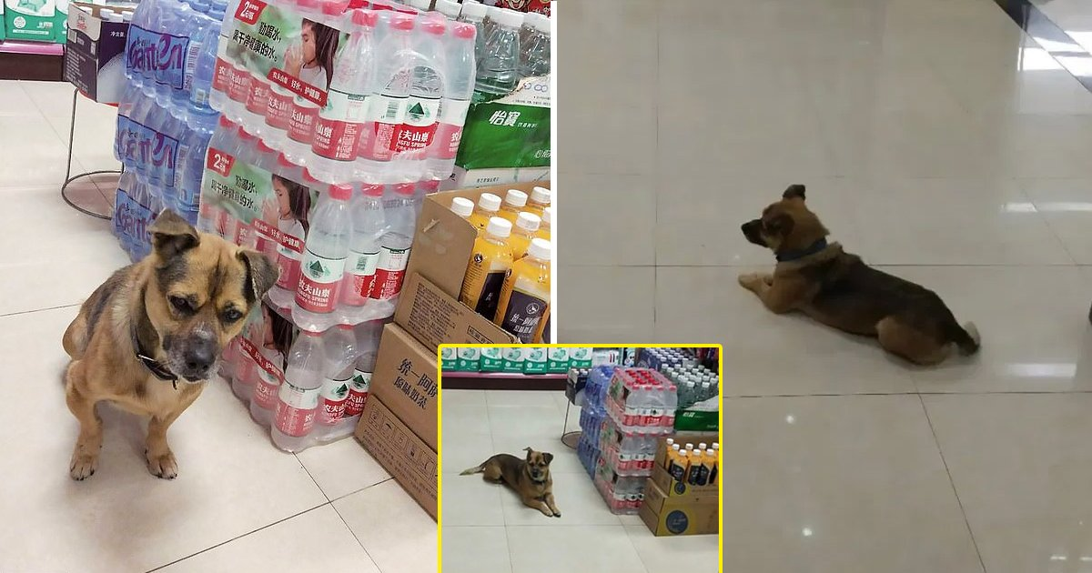 loyal dog waits.jpg?resize=1200,630 - Corona In Wuhan: Dog Eagerly Awaits Dead Owners' Return At Hospital For 3 Months