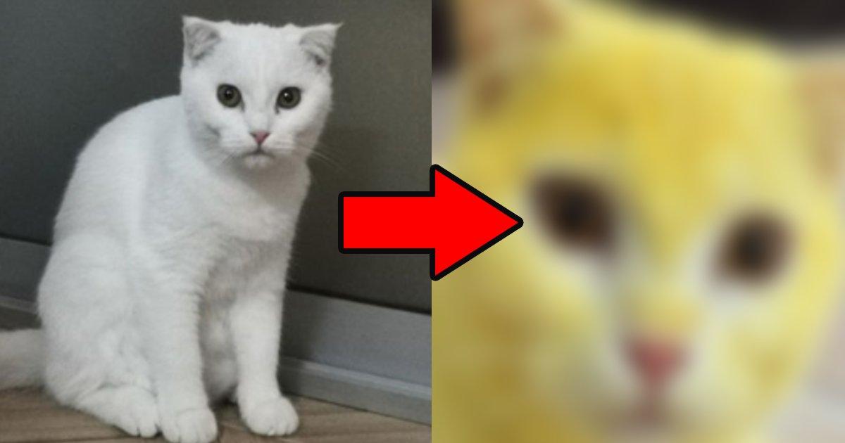 neko.png?resize=412,232 - 飼い猫の毛を黄色に染めた飼い主に動物虐待疑惑が浮上するも…?「悲しいです」