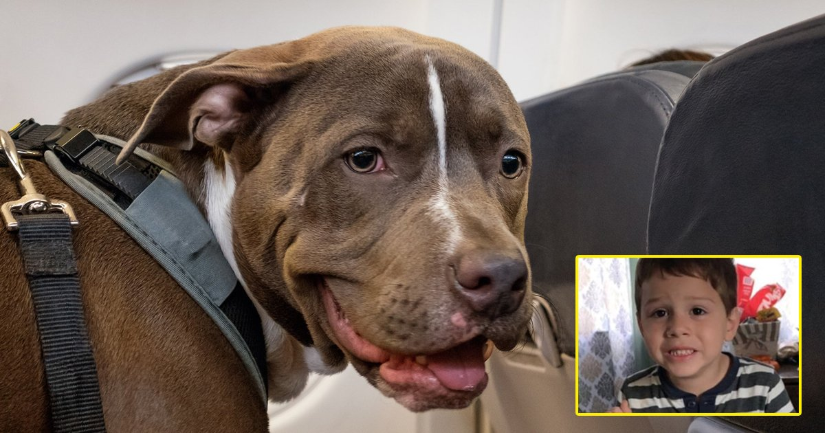 pitbull 1.jpg?resize=412,232 - Gruesome Pitbull Dog Attack Leaves 5-Year-Old Dead After Relatives Leave His Room