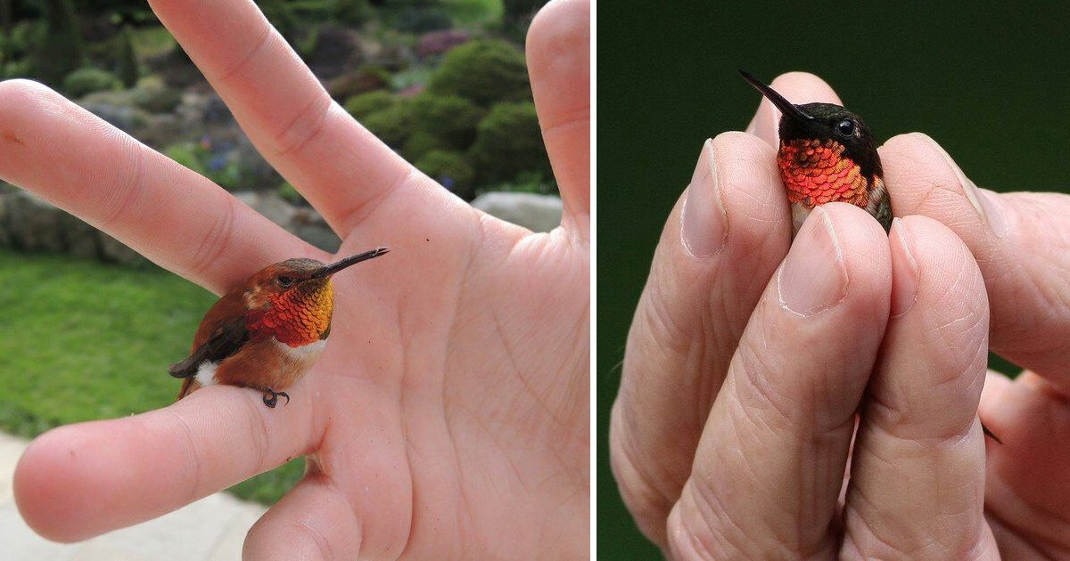 smallest bird.jpg?resize=1200,630 - Have A Fascinating Look at the Bee Hummingbird - The World's Smallest Bird