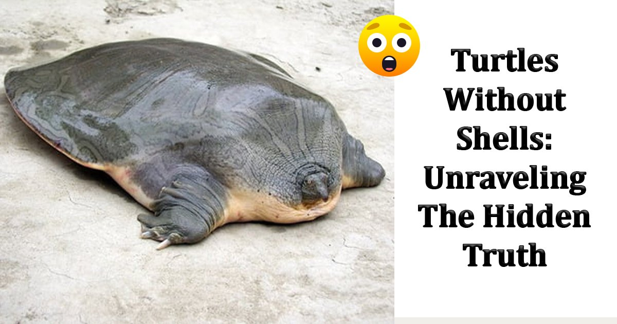 turtles shells.jpg?resize=1200,630 - Turtles Without Shells: Unraveling The Hidden Truth Of The Unknown
