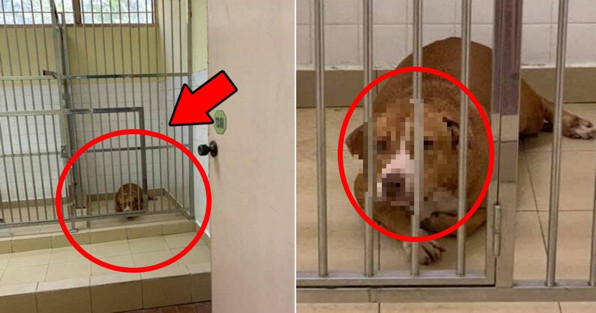ude.png?resize=412,232 - 見知らぬ人の腕を噛みつき安楽死の危機に立たされている犬のリアルな表情が話題に