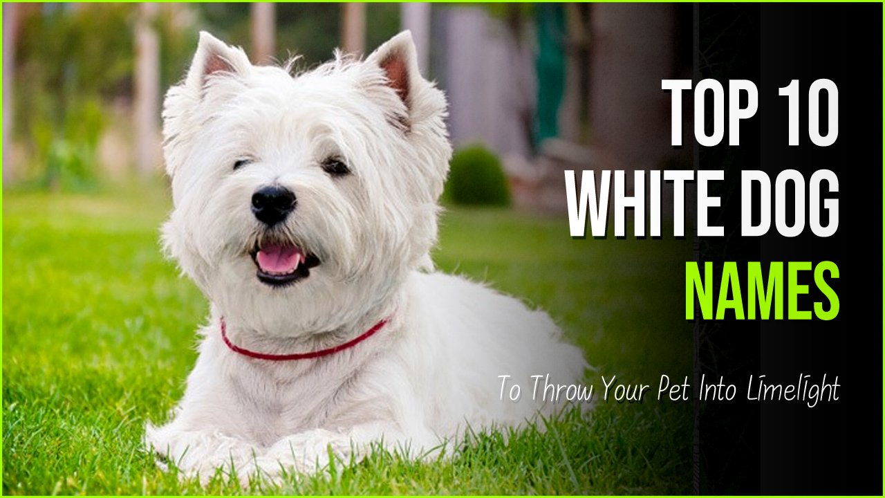 white dog names.jpg?resize=1200,630 - 10 Unique White Dog Names To Throw Your Pet Into Limelight