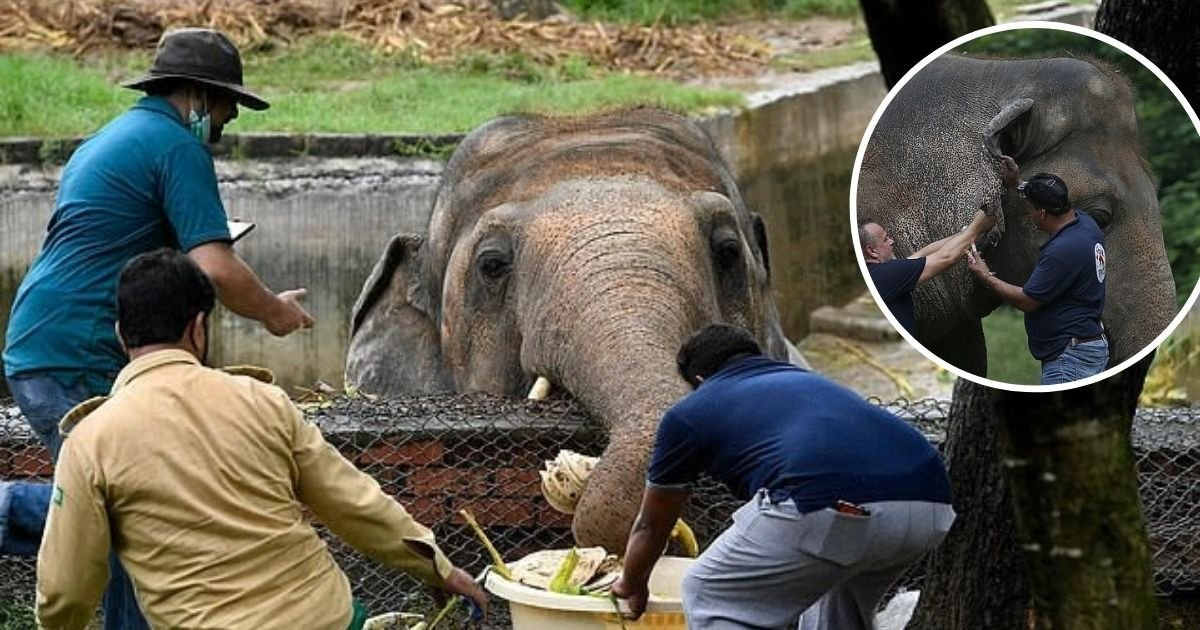 """1 73.jpg?resize=1200,630 - """"Elefante Más Triste Del Mundo"""" Obligado A Vivir Por 35 Años En Un Espacio Minúsculo, Recibe Orden Médica De Abandonar El Zoo"""