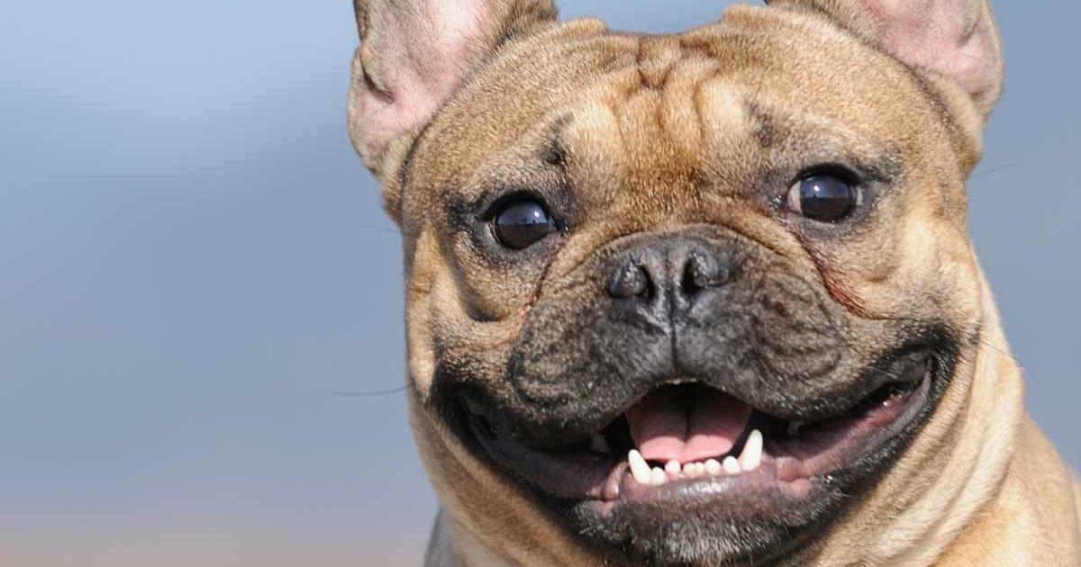 10 tips for a happy healthy dog 72579499 1280 e1599503202552.jpg?resize=1200,630 - Découvrez cette BD retraçant la vie d'un chien