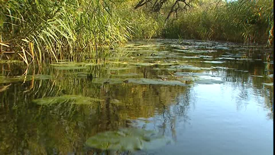 Paseo en Bote / Agua estancada / Alemania | SD Stock Video 218-406-905 |  Framepool & RightSmith Stock Footage