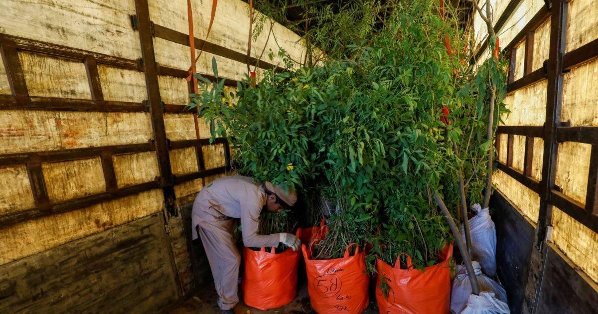 63afc21f a2cc 4a92 9bc5 af68a071ff75 w1200 r1 e1599238907611.jpg?resize=1200,630 - Pakistan : pendant la pandémie, des chômeurs ont été embauchés pour planter des arbres