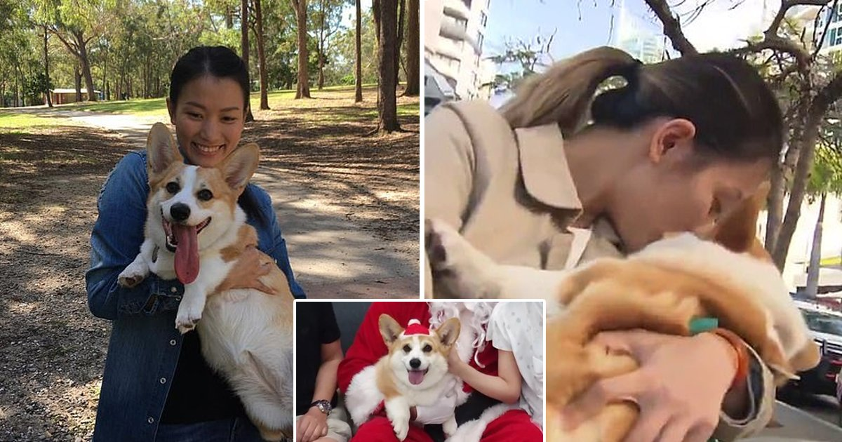 adgsdga.jpg?resize=1200,630 - Missing Dog Reunites With Pet Owner After Petsitter Dognapped Her From Gold Coast