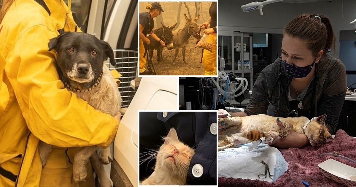 animals7.jpg?resize=412,232 - Firefighters Rescue Scorched Animals As Devastating Wildfires Continue To Ravage US West Coast