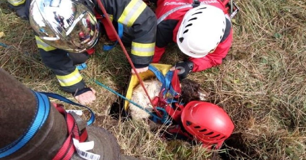 apple.jpg?resize=1200,630 - Nord: un chien en détresse a mobilisé des dizaines de pompiers pour être sauvé