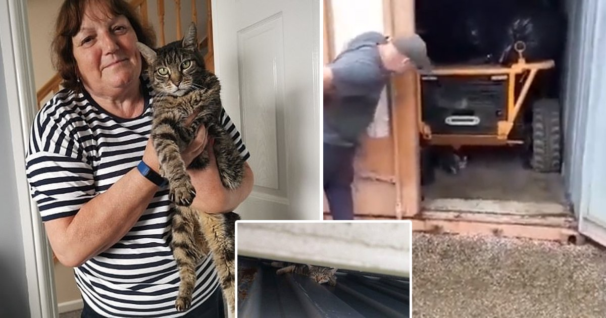 cat survives.jpg?resize=1200,630 - Miracle Video Shows Tabby Cat Rescued After Surviving 2 Months Inside Metal Container
