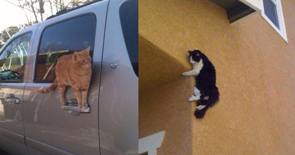 catjiyujizai.png?resize=1200,630 - ネコのバランス感覚はあなどれない?あらゆるところにちょこーんとしている姿に「じわじわくる…」