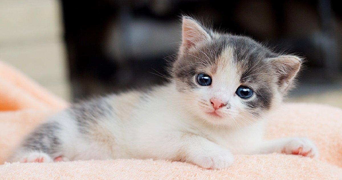 chat.jpg?resize=412,232 - Quels sont les 10 noms de chats les plus donnés en France en 2020 ?