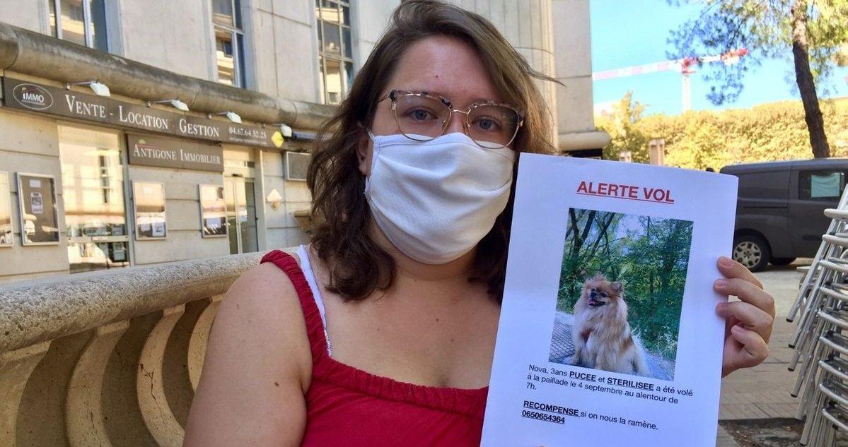 chien.jpg?resize=1200,630 - Grâce à Rémi Gaillard, elle retrouve sa chienne qui était vendue sur un marché aux puces