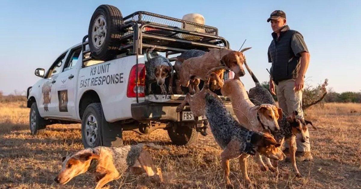 chiens.png?resize=412,232 - Des chiens dressés pour préserver la vie sauvage et lutter contre le braconnage