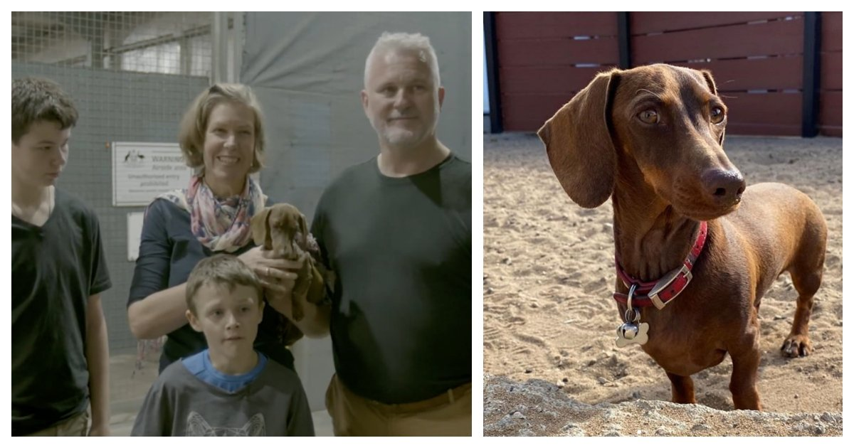 collage 8.jpg?resize=1200,630 - Dog Reunited With Owners After 5 Months Thanks To Volunteers Who Travelled 10,000 Miles