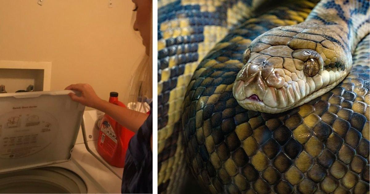 diseno sin titulo 22 2.jpg?resize=1200,630 - Mujer Que Va A Lavar Su Ropa En La Lavadora Encuentra Dentro Una Serpiente Gigante