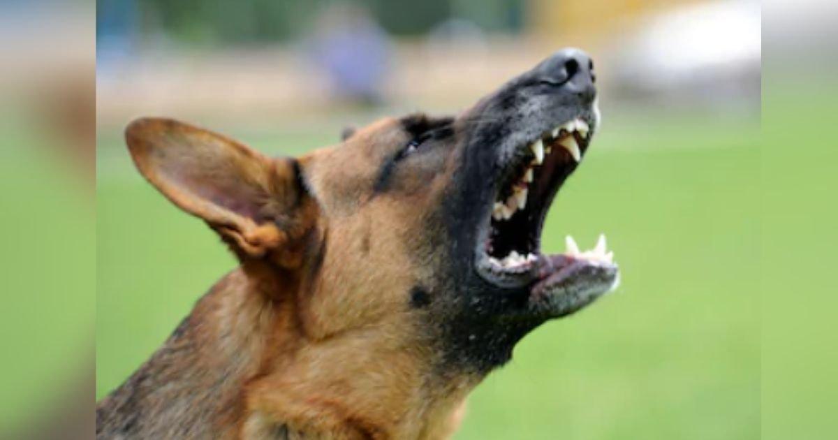 diseno sin titulo 34 2.jpg?resize=412,232 - Hombre Mayor Le Quita La Vida A Una Vecina Después Que Ella Le Reclamó Que Sus Perros Eran Agresivos