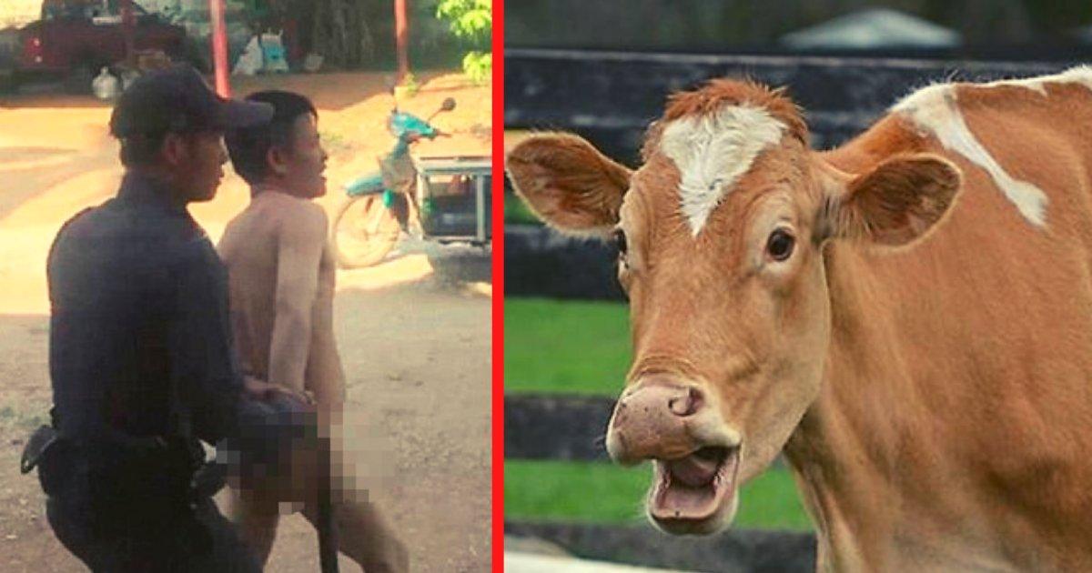 diseno sin titulo 47.png?resize=1200,630 - Hombre Es Arrestado Por Mantener Relaciones Íntimas Con Una Vaca Dentro De Un Establo