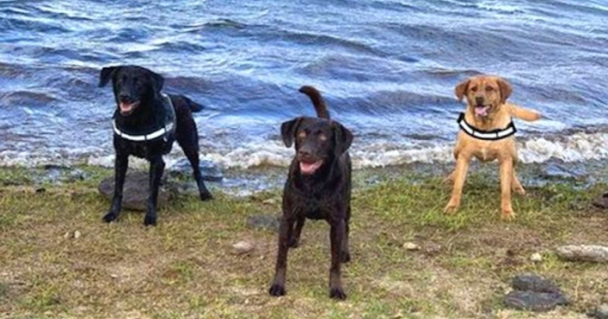 doggos.jpg?resize=412,232 - Family Left Devastated After Their Dogs Jumped Off A Cliff And Died