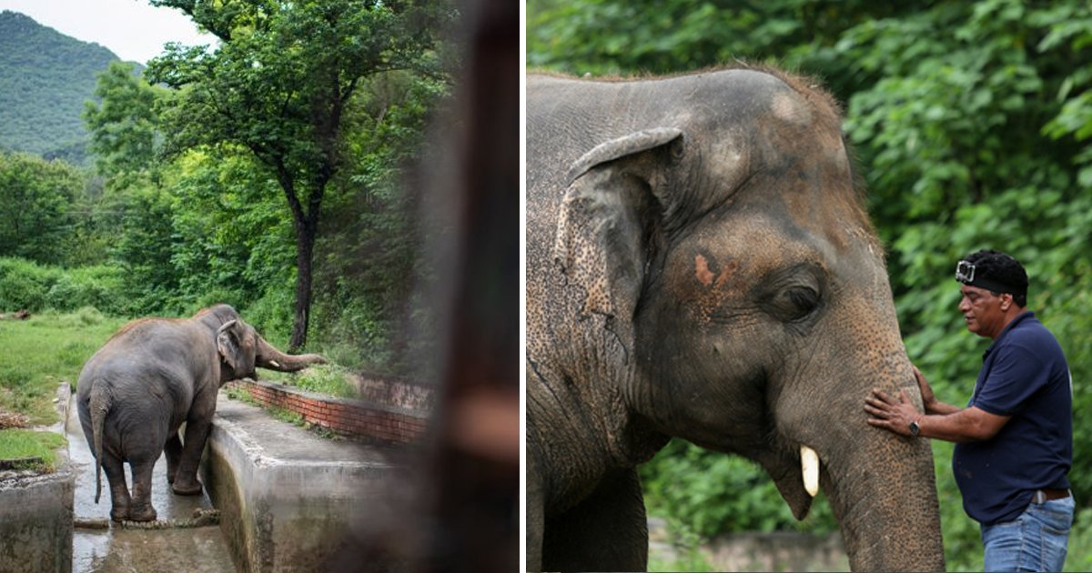 elephant.jpg?resize=1200,630 - 'World's Loneliest Elephant' All Set To Leave Tiny Enclosure In Pakistan After 35 Years