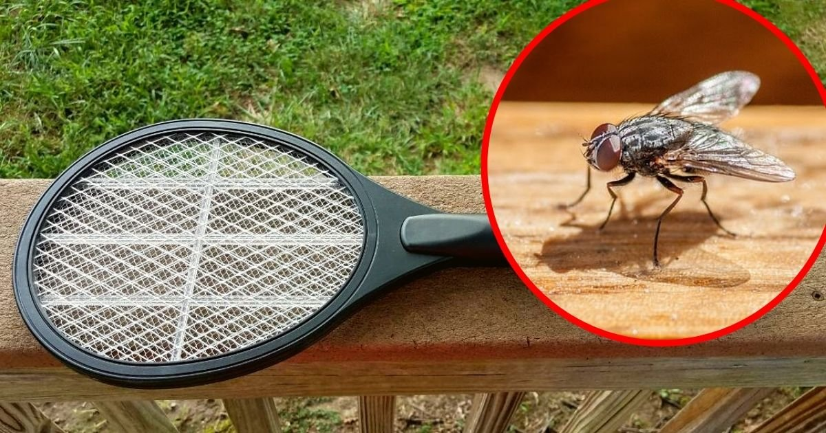 fly5.jpg?resize=1200,630 - Elderly Man Accidentally Blew Up His House While Trying To Kill A Fly With Electric Swatter