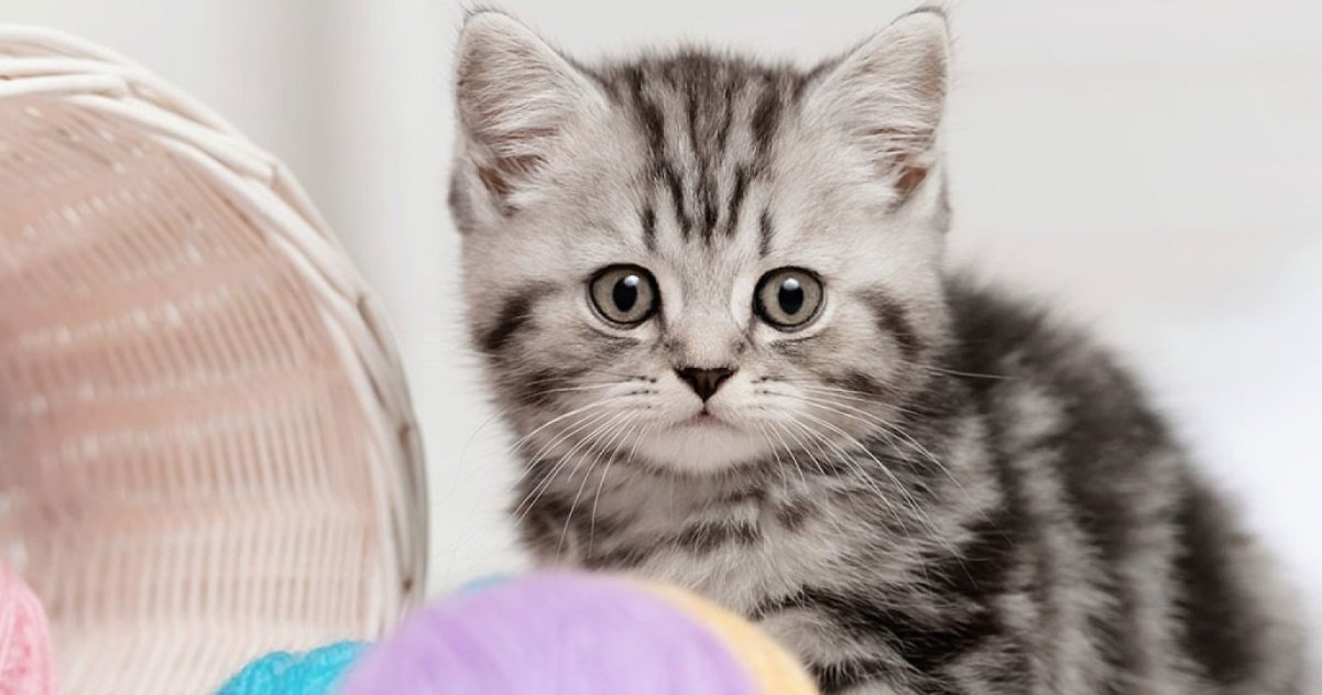 minou.jpg?resize=1200,630 - Rennes: un homme tue son chat car il venait de le mordre et de le griffer