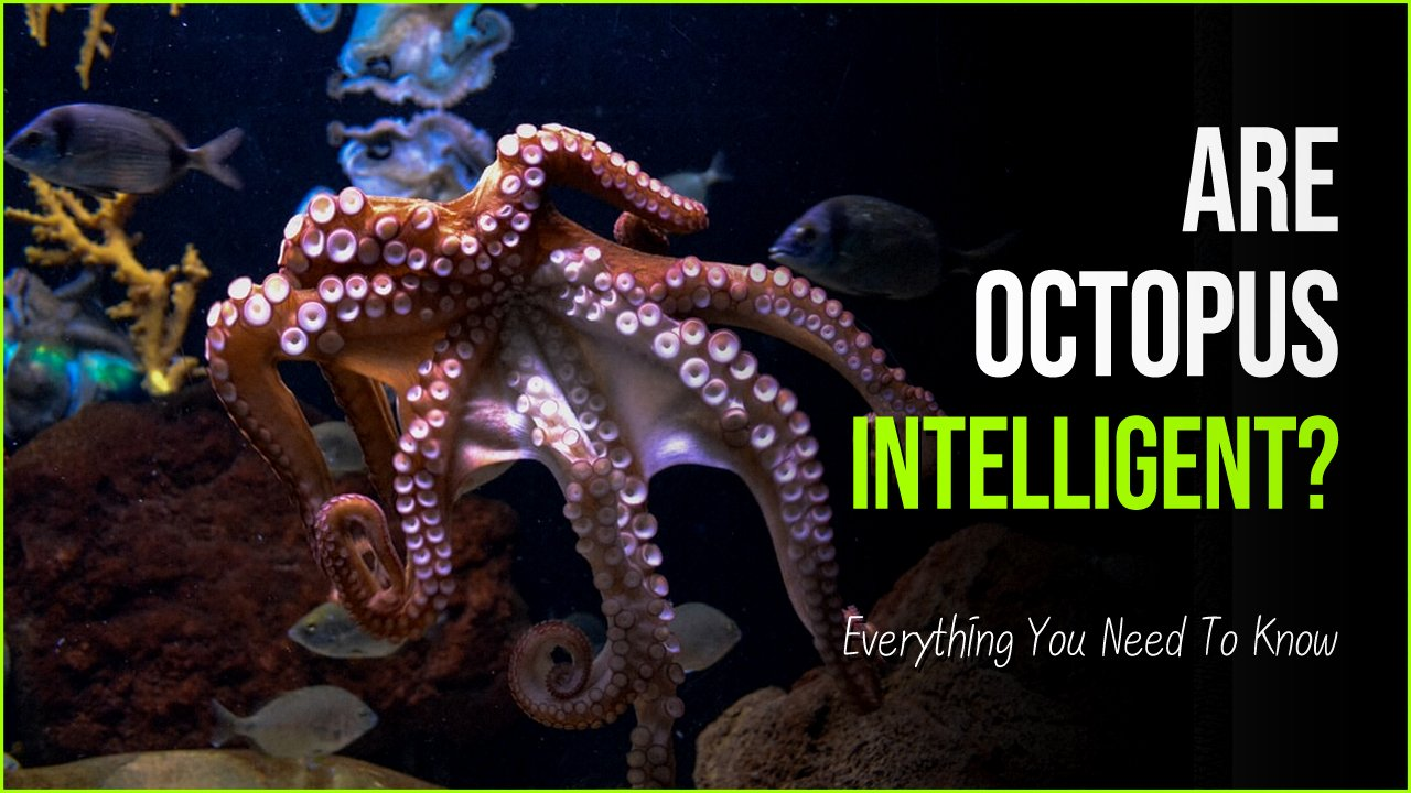 octopus.jpg?resize=1200,630 - Are Octopus Intelligent As The World Calls Them Or Is It Untrue?
