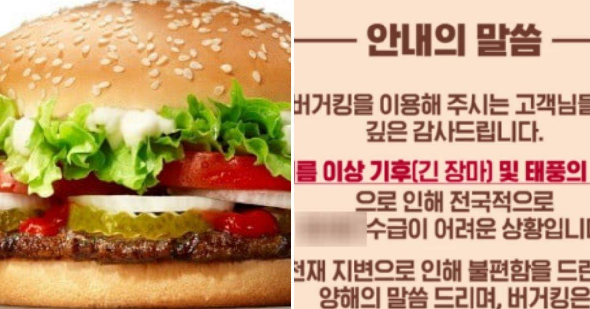 "untitled 163.jpg?resize=412,232 - ""버거킹에서 당분간 '이 채소'가 없는 햄버거를 맛보게 된다"""