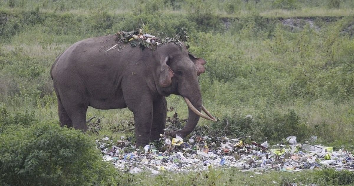 untitled design 4 7.jpg?resize=1200,630 - Elephant Seen Snacking On Plastic Trash Left Behind By Tourists