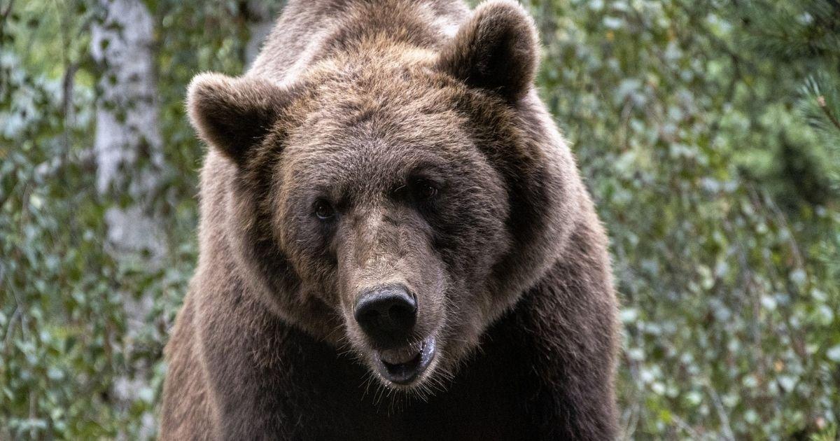 vonjour6 1.jpg?resize=412,232 - Au moins dix oursons sont nés cette année dans les Pyrénées