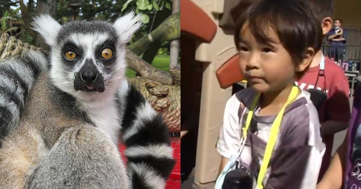 1 163.jpg?resize=1200,630 - 5-Year-Old Boy Gets Credit For Finding A Stolen Lemur