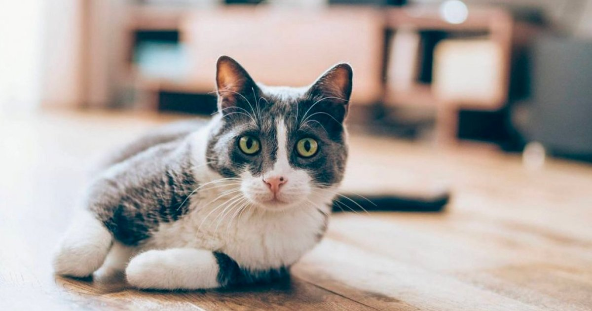 1 94.jpg?resize=1200,630 - Psicólogos Revelan El Gran 'Truco' Que Permite Establecer Contacto Fácil Con Gatos