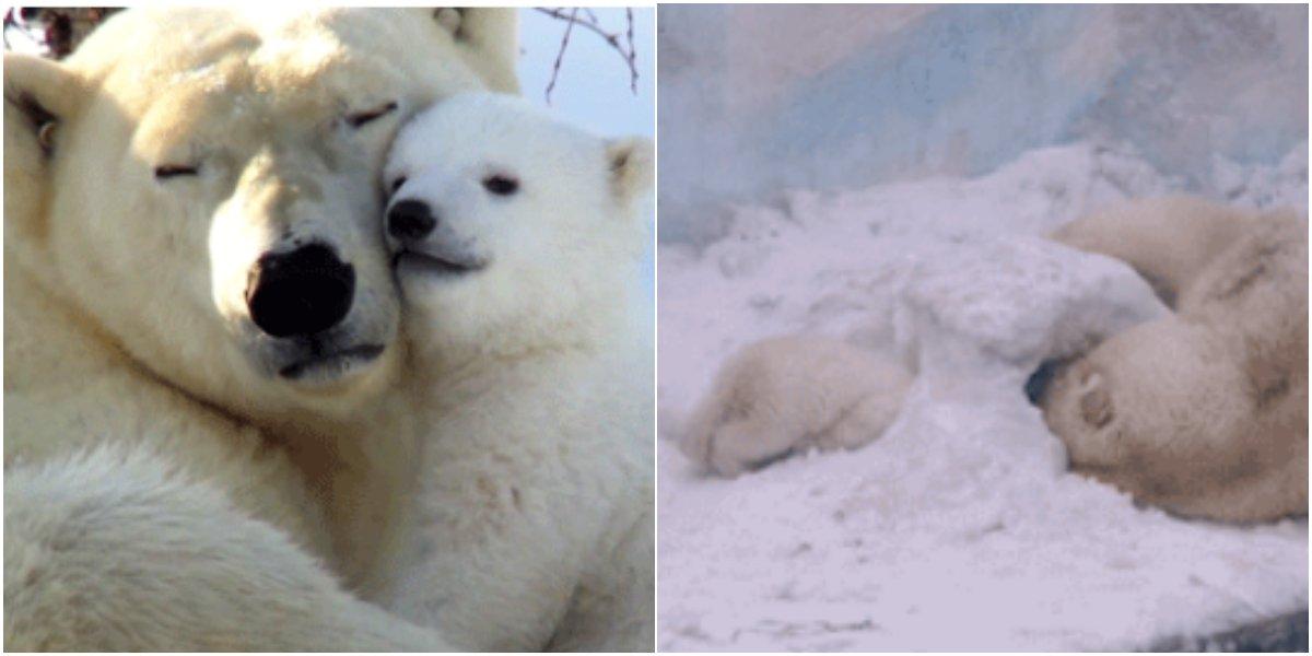 3 21.png?resize=412,232 - 이정도로 심장 아플 줄은 몰랐는데...엄마 북극곰과 아기 북극곰의 일상.gif