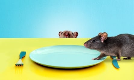 rats in restaurants