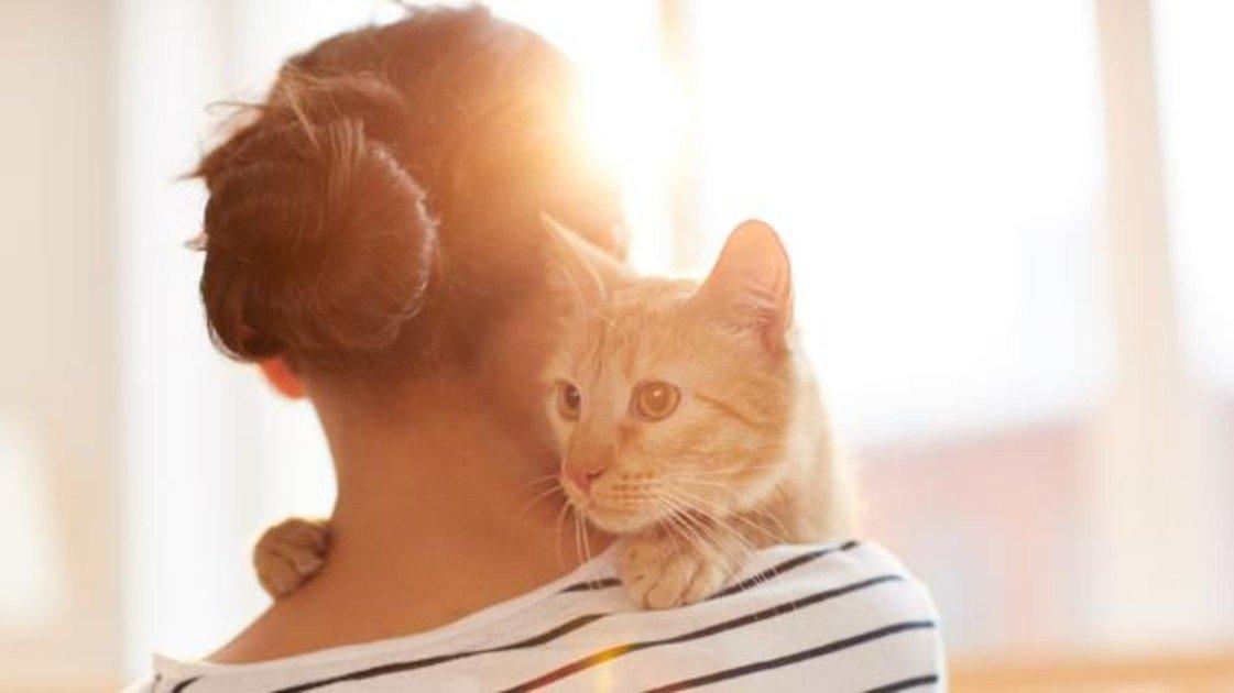 Fin del debate: tu gato sí te quiere