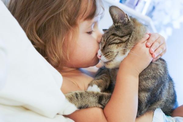 Los gatos QUIEREN a sus dueños?