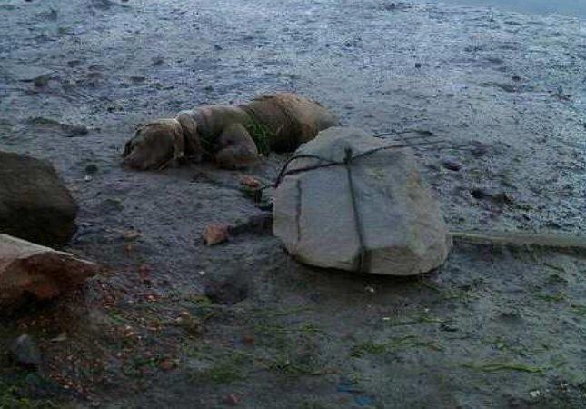 Sujeto amarró a su perro a una piedra en una playa para que muera ahogado |  OMG