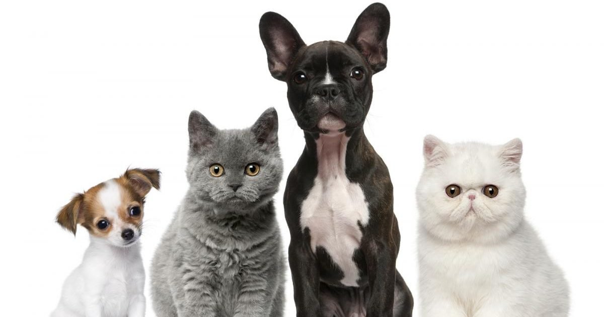 bigstock group of dogs and cats in fron 15953471 e1602048376240.jpg?resize=412,232 - 15 photos d'animaux après leur adoption