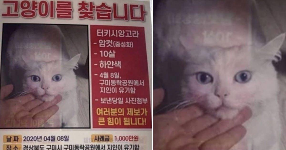 "cat.jpg?resize=1200,630 - ""사돈 지인이 제 고양이를 인터넷 카페에 몰래 분양시켰습니다. 제발 도와주세요"""