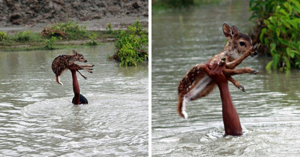 deer rescue333 e1602033889220.png?resize=412,232 - Bangladesh : Un garçon a risqué sa vie pour sauver un bébé faon