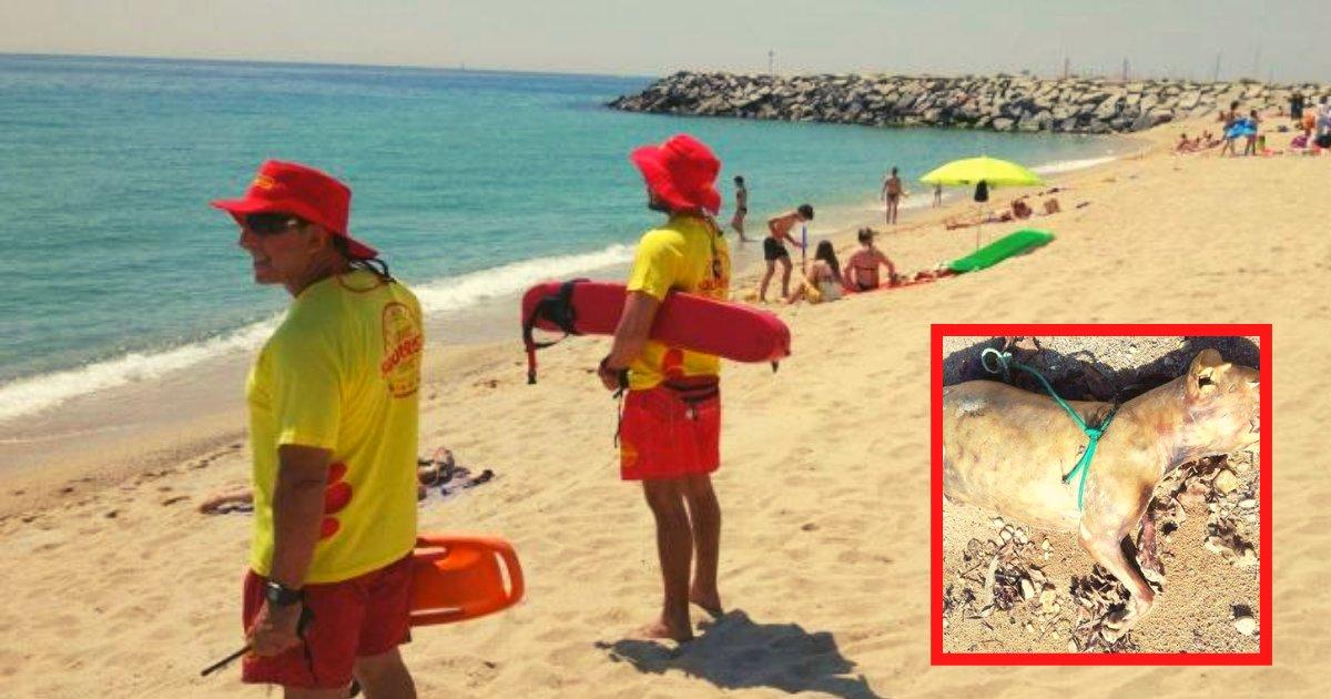 diseno sin titulo 1 5.png?resize=412,232 - Mujer Patea Y Ahoga A Su Perro A La Vista De Todos En Mitad De La Playa