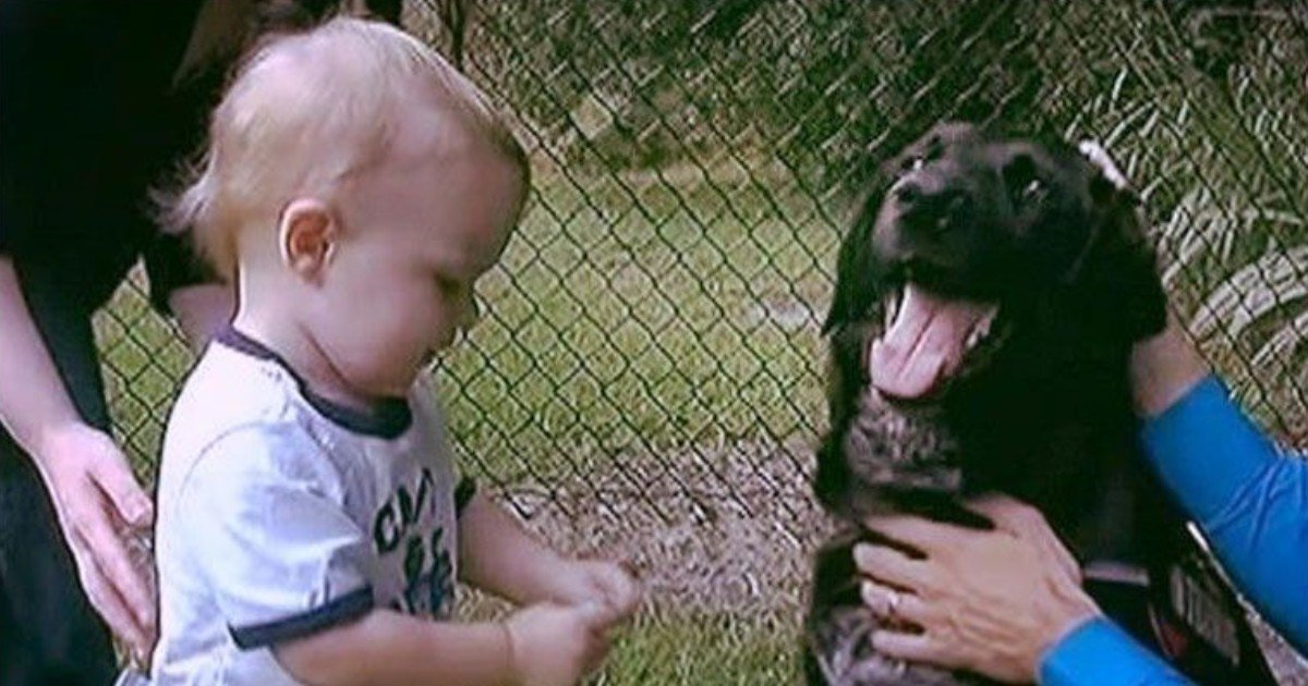 e18486e185aee1848ce185a6 11 1.jpg?resize=1200,630 - Family Dog Dubbed A Hero After Saving 7-Month-Old Infant From Cruel Babysitter
