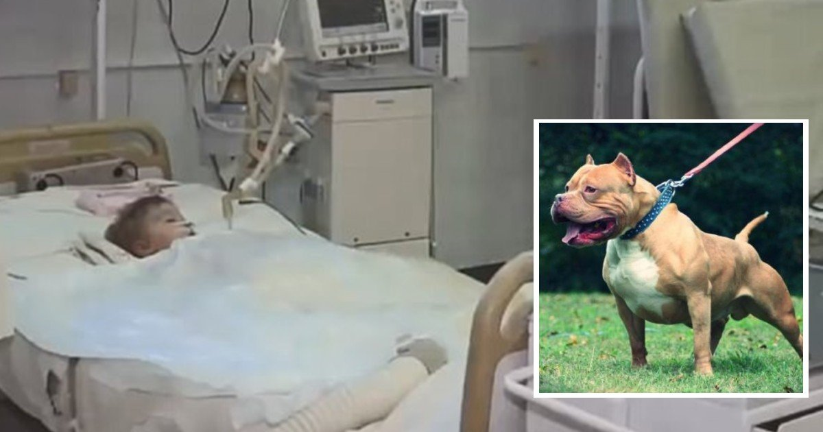 e18486e185aee1848ce185a6 2020 10 12t011634 339.jpg?resize=412,275 - 2-Year Old Boy Dies After Dog Ripped Off His Genitals On His Birthday