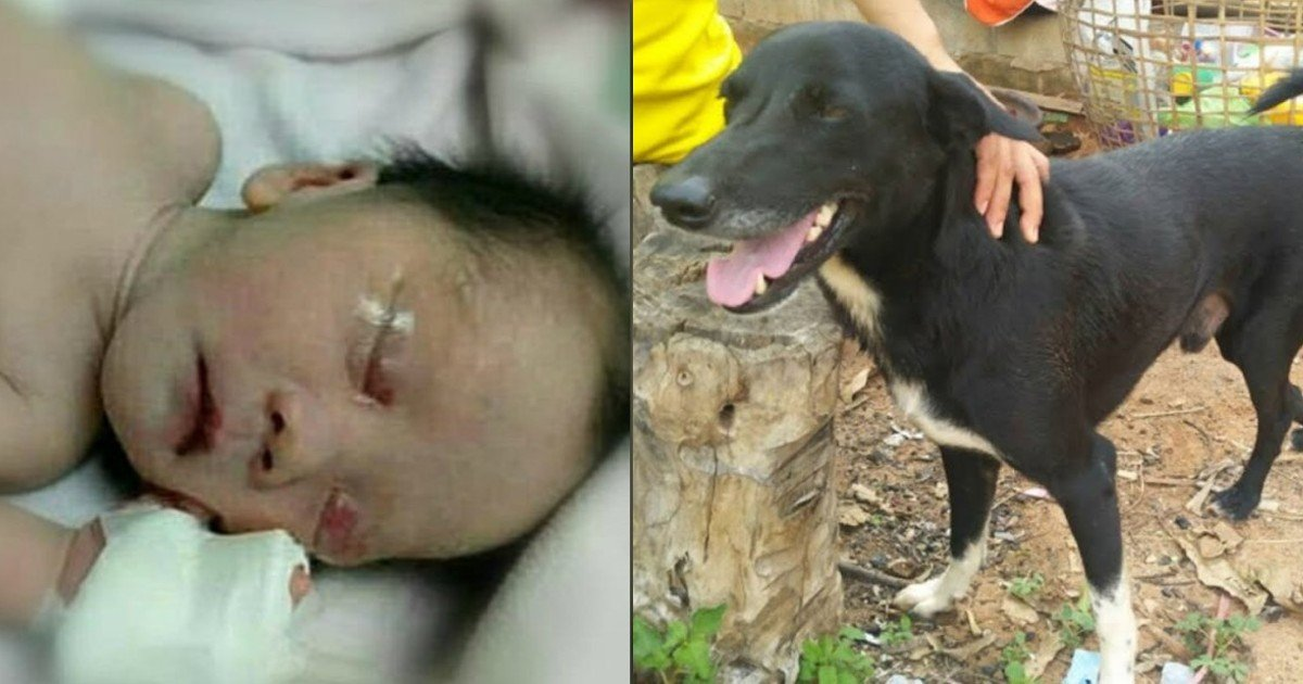 e18486e185aee1848ce185a6 2020 10 13t114204 105.jpg?resize=1200,630 - Hero Dog Saves Newborn After Teen Mom Buries Son Alive