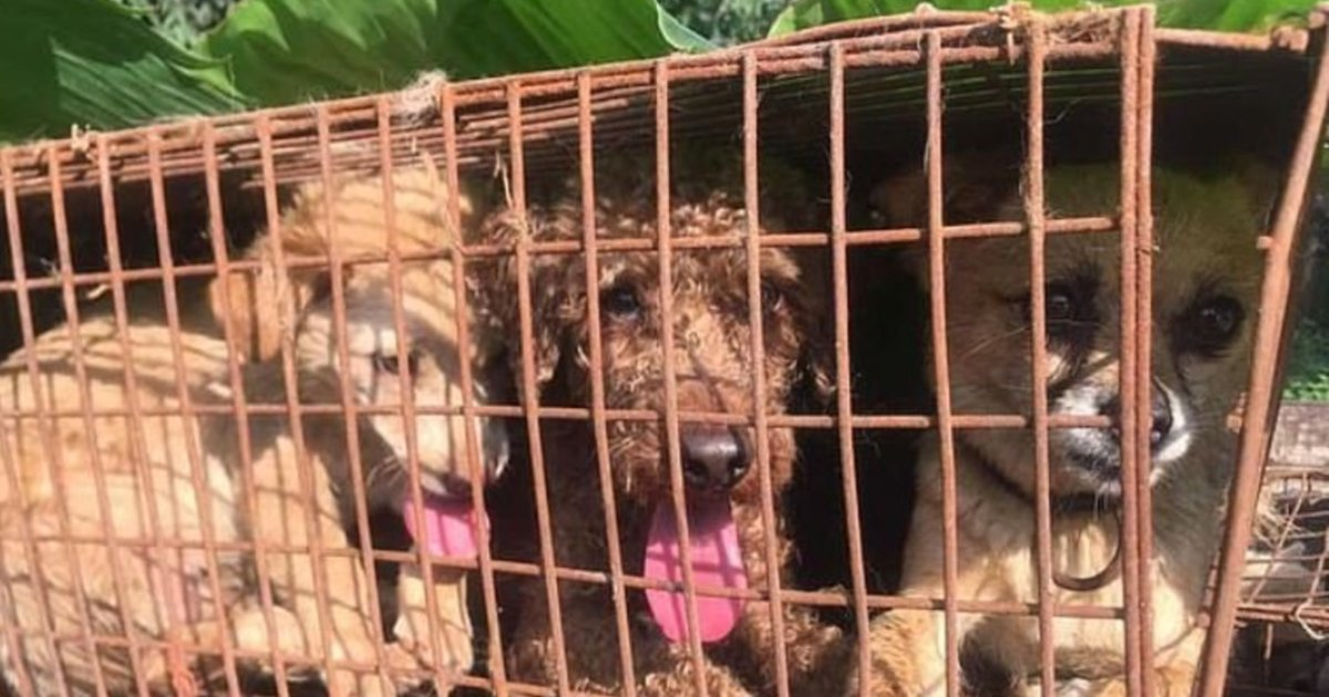 e18486e185aee1848ce185a6 23.jpg?resize=1200,630 - More Than 62 Dogs Waiting To Be Killed Have Been Rescued